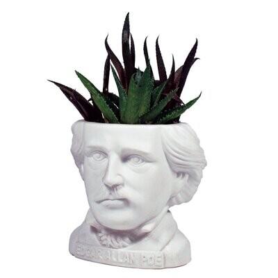 Poe Planter