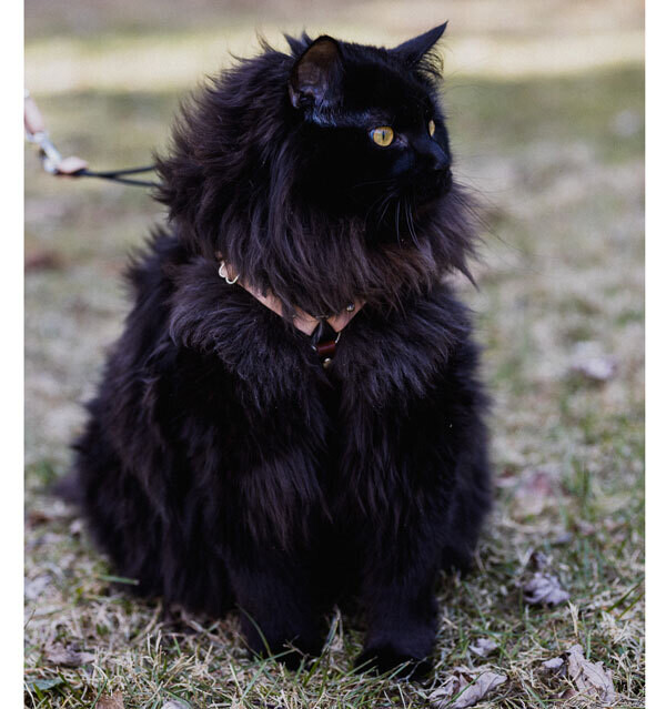 OutBound Cat Harness™ Extra Large