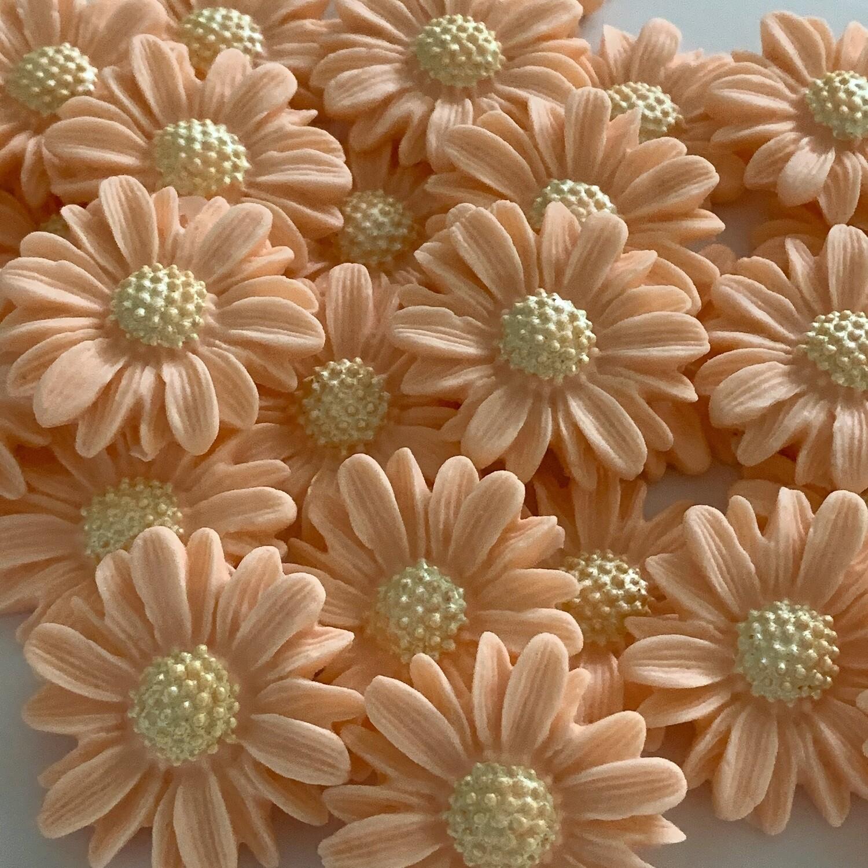 Peach Blush Daisies