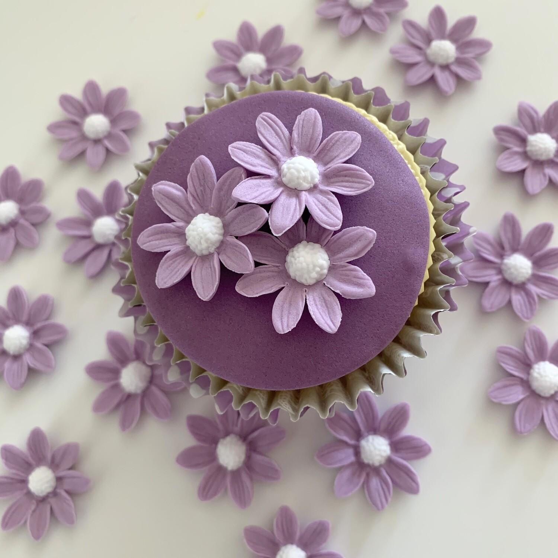 Lilac Marguerite Daisies