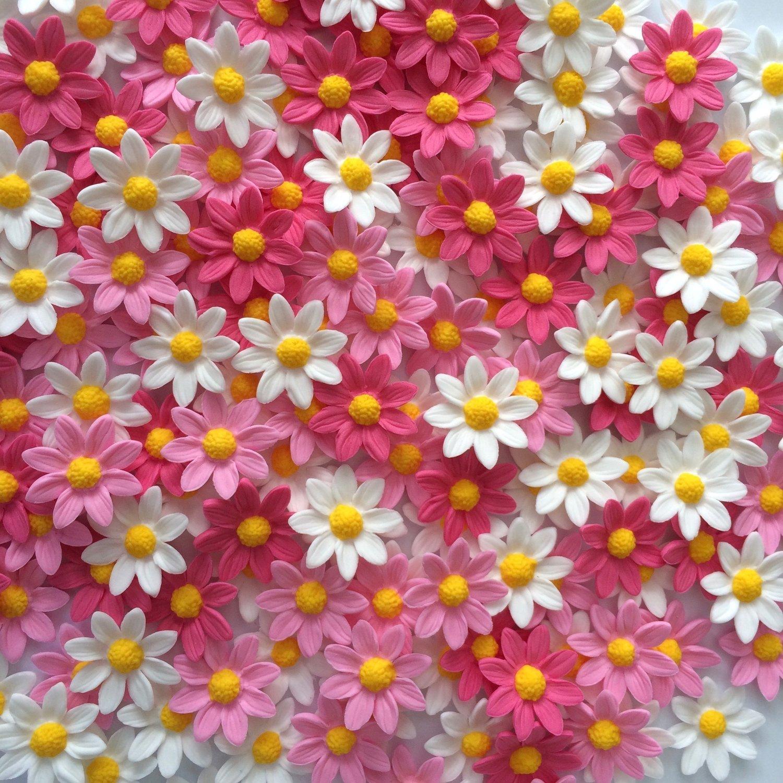 Pink & White Daisies