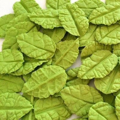 Veined Green Leaves