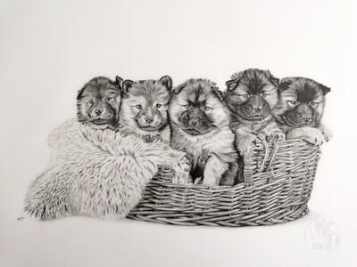 Original Puppies in basket A2