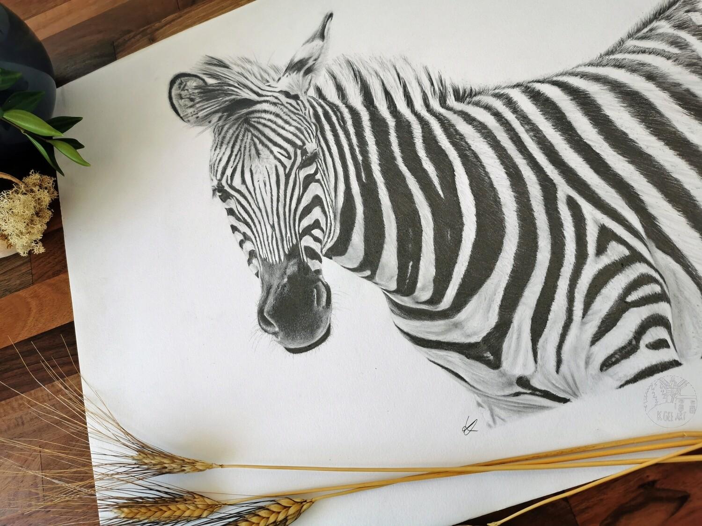 Original Zebra A2