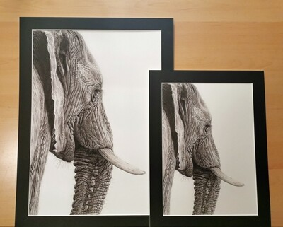 Mounted Giclée Print Elephant A4