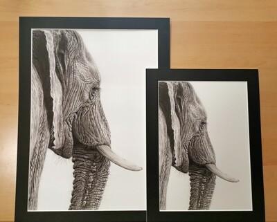 Mounted Giclée Print Elephant A3