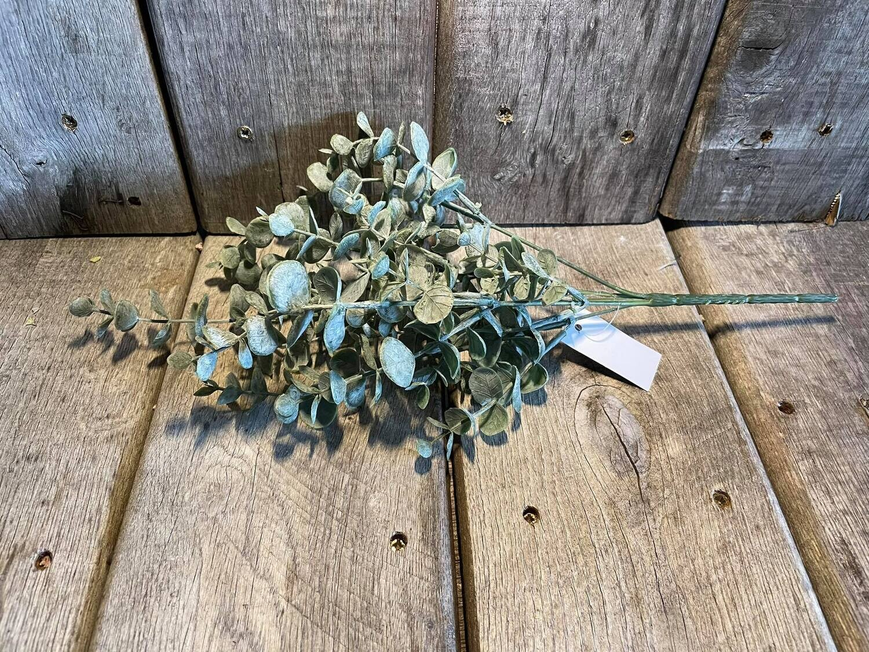 bosje Eucalyptus 35 cm