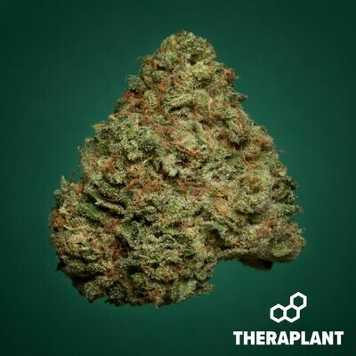 Rexibrid T27 9662 - 3.5g Flower (Theraplant)