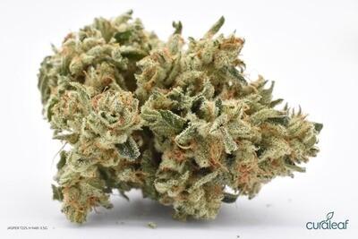 Jasper T22% H 9481 Flower - 3.5g (Curaleaf)