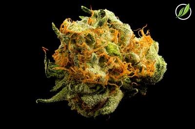Jeemodex Flower T27% I 9578 - 3.5g (CTPharma)