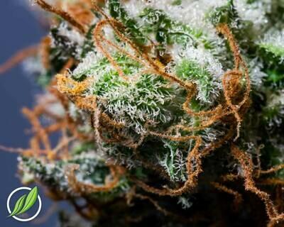 Purpalex Flower T30% I 9587 (3.5g)(CT Pharma)