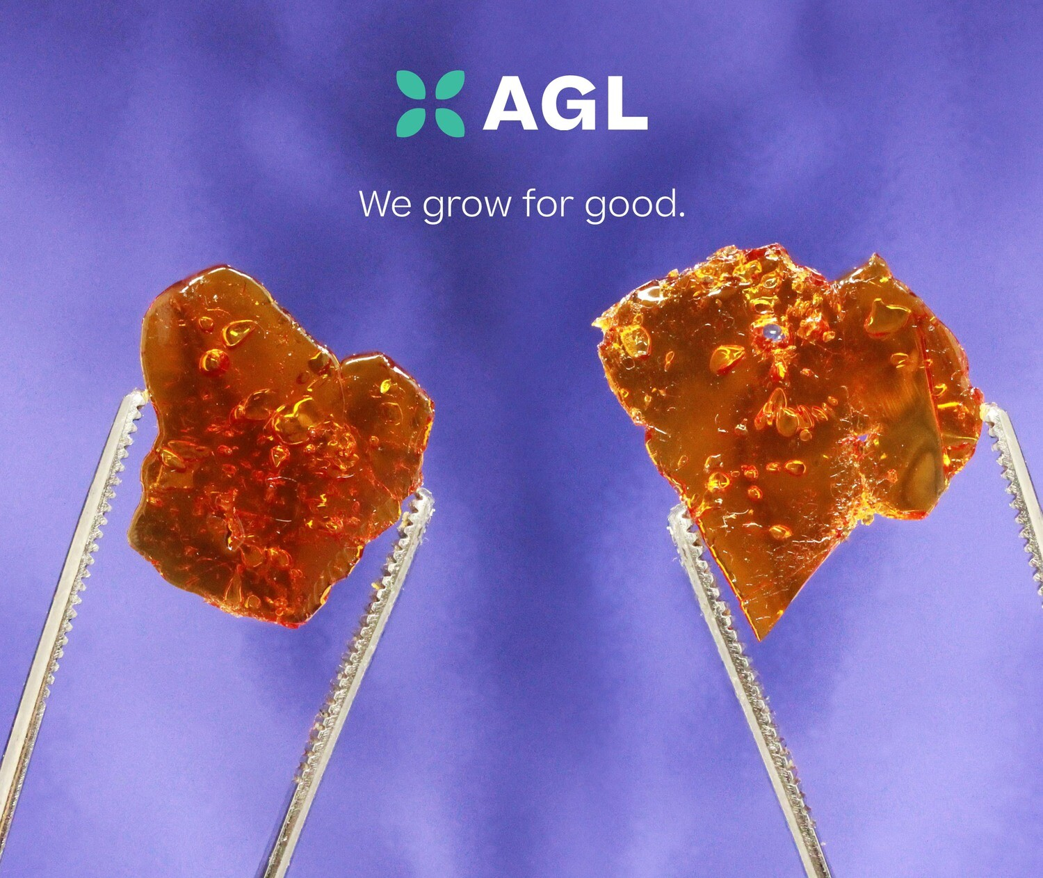 Indicol FG SH 87.72 NDC: 9829 (0.5g Hard Concentrate)(AGL)