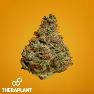 Aniva T26 10031 - 3.5g Flower (Theraplant)