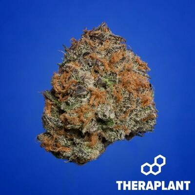 Ghanica T20 10640 - 3.5g (Theraplant)