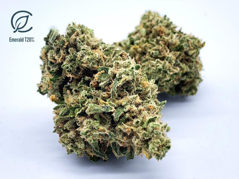 Emerald T20% FL 10539 - 7g (Curaleaf)