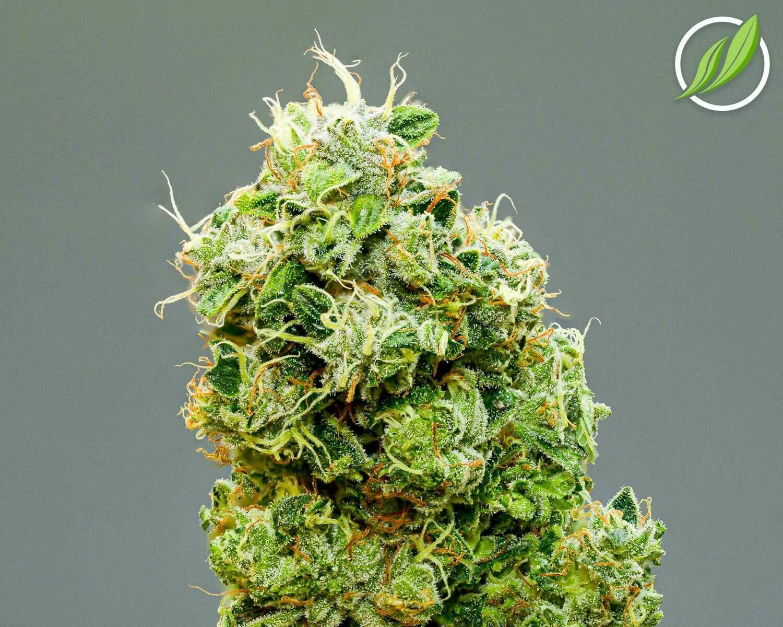Bandubex Flower T27% H 10821 - 3.5g (CTPharma)
