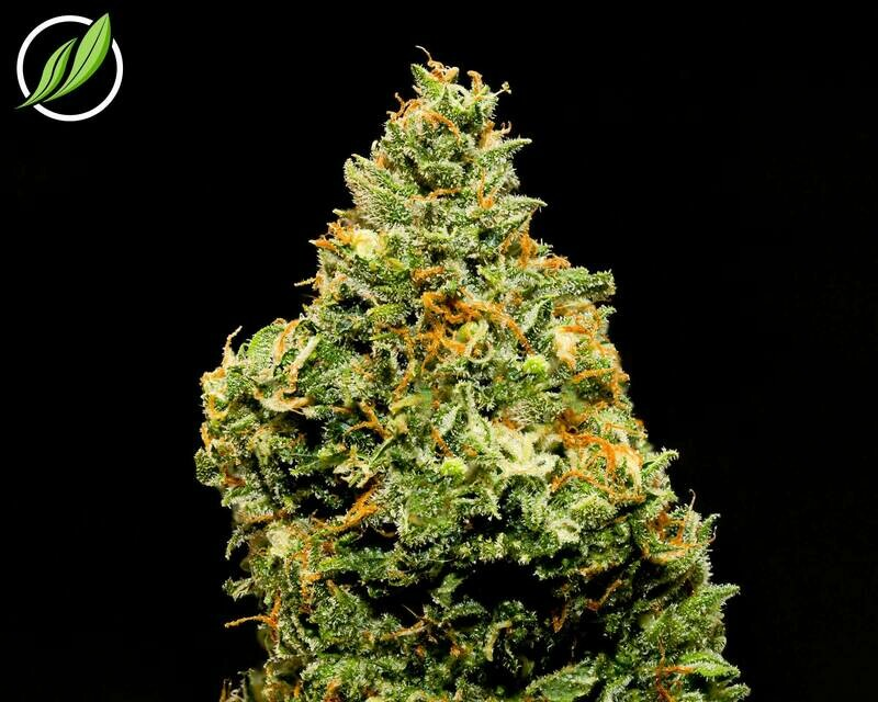 Guaiven Flower T31% H 10814 - 3.5g (CTPharma)