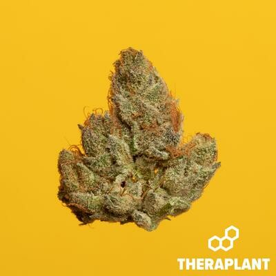 Biscay T16 11076 - 3.5g (Theraplant)