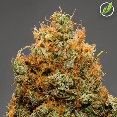 Juiceden Flower T31% H 10888 - 3.5g (CTPharma)