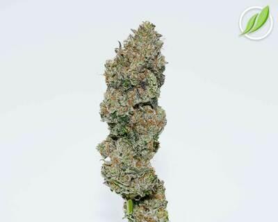 Fioraden C Flower T33% I 11414 - 3.5g (CTPharma)