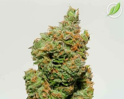 Lexikan Flower T35% S 10894 - 3.5g (CTPharma)