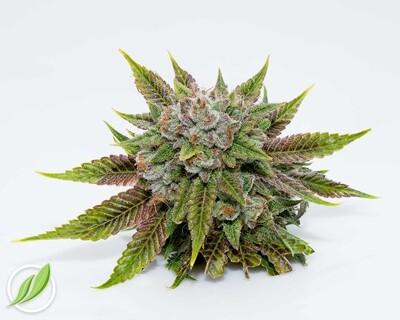 Lunaven Flower T32% I 12005 (3.5g)(CT Pharma)