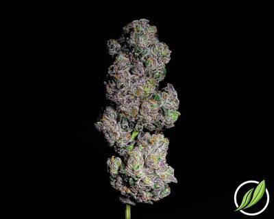 Scoopaden Flower T32% I 12561 (3.5g)(CT Pharma)