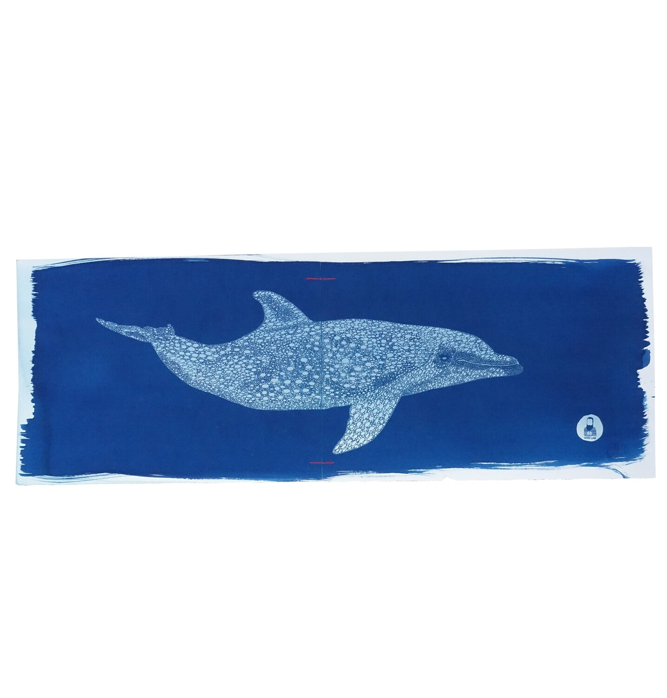 Dolphin, 2021