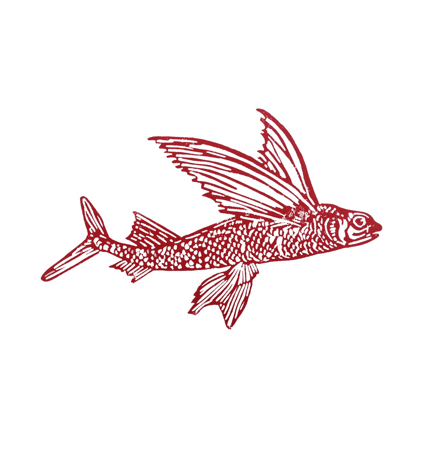Red flying fish, 2021