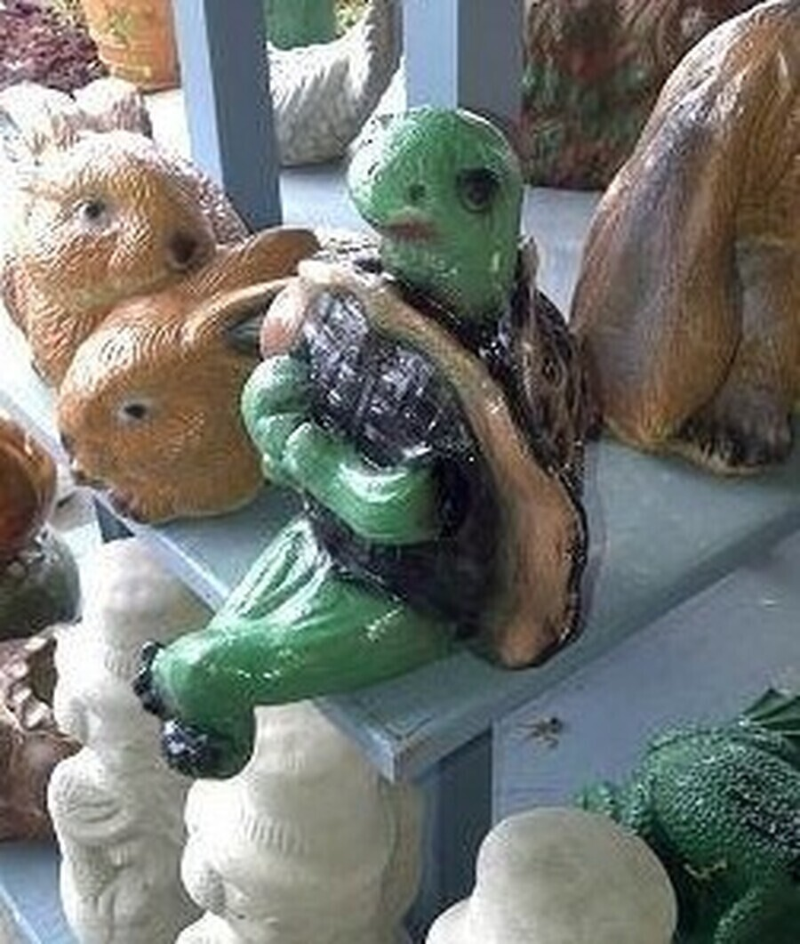 Sitting Ledge Turtle