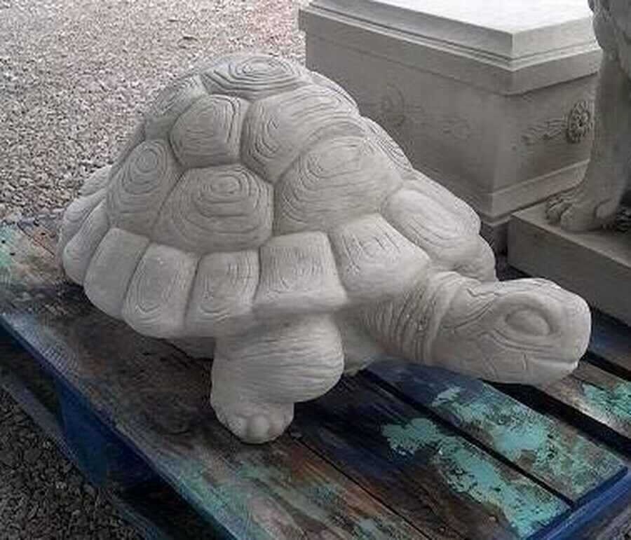 XL Detailed Turtle