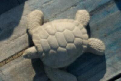 Tiny Sea Turtle