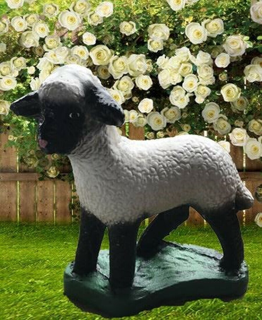 Sm. Sheep