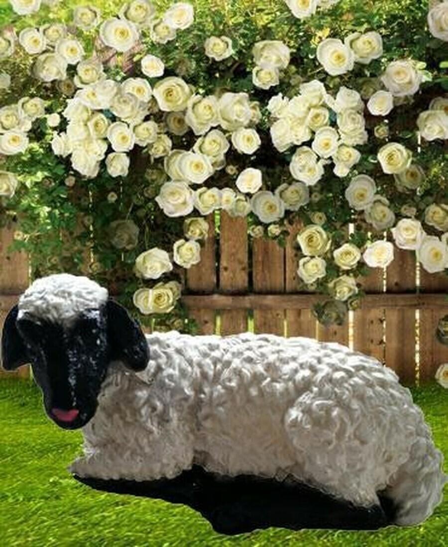 Laying Lamb