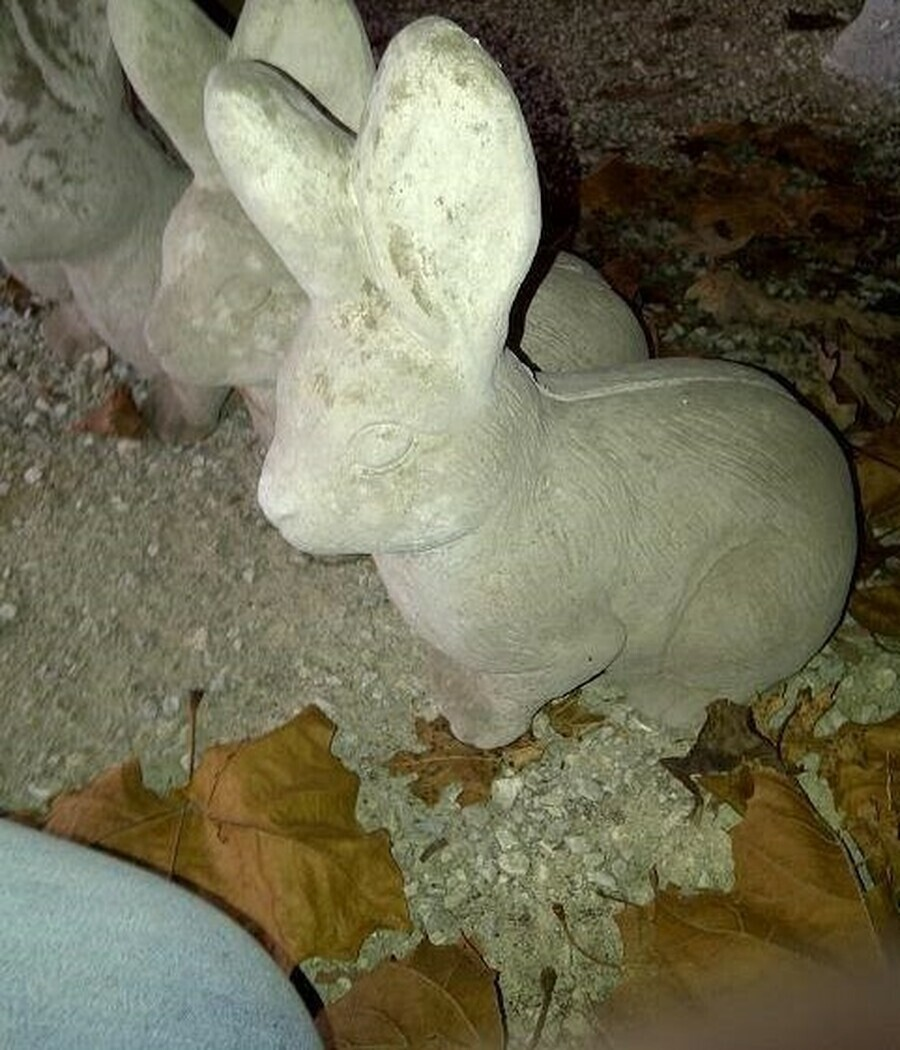 Big Ear Rabbit