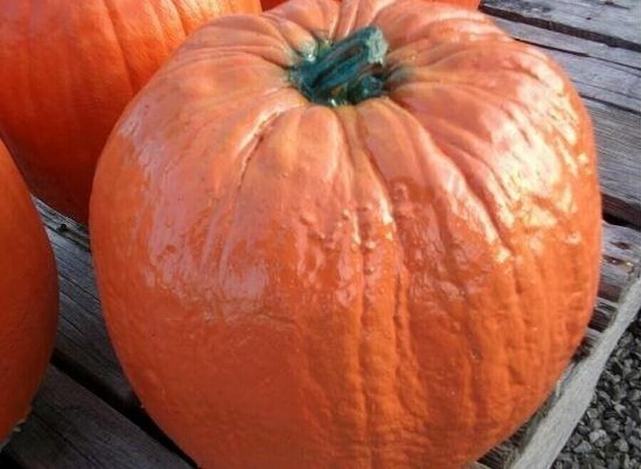 Lg. Perry Pumpkin