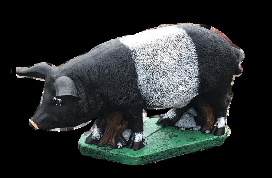 Real Pig