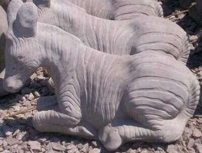 Sm. Zebra Laying
