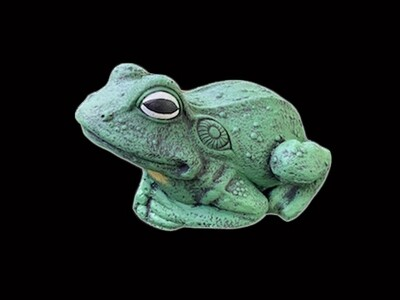 Wart Frog