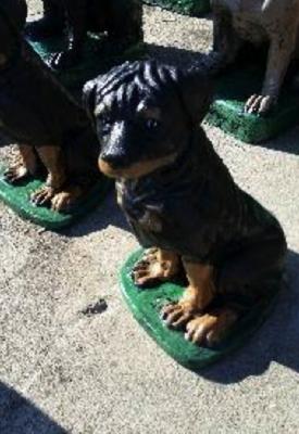 Sitting Rottweiler Pup