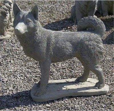 Standing Husky
