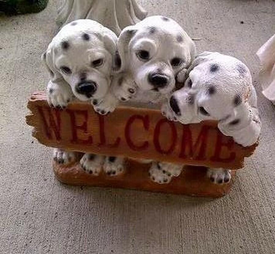 3 Welcome Dogs