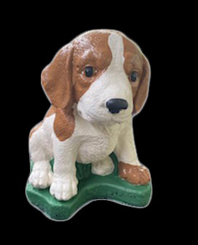 Beagle Pup