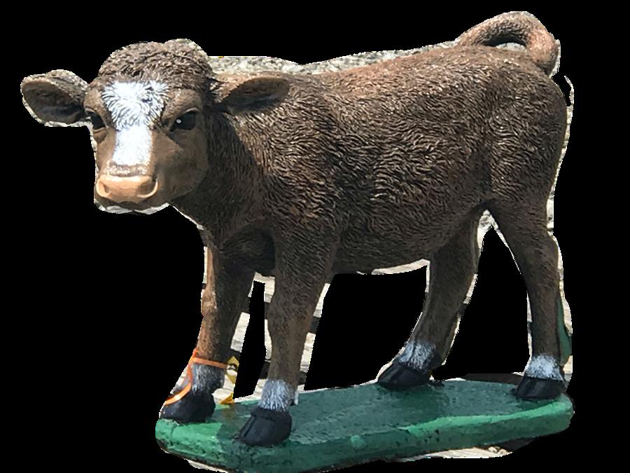 Buttercup Standing Calf