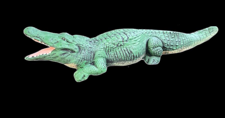 Alligator MD.