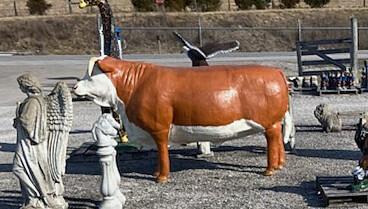 Hereford Bull Aluminum