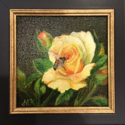 Texas Yellow Rose 6x6 Oil on Linen by Sonja A Kever