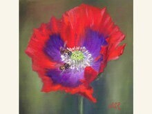 'Poppy Pair' 8x8 Oil on Linen by Sonja A Kever