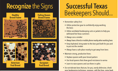 A NewBee's Guide to TEXAS BEEKEEPING
