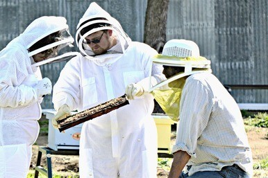 Private Beekeeping Lesson